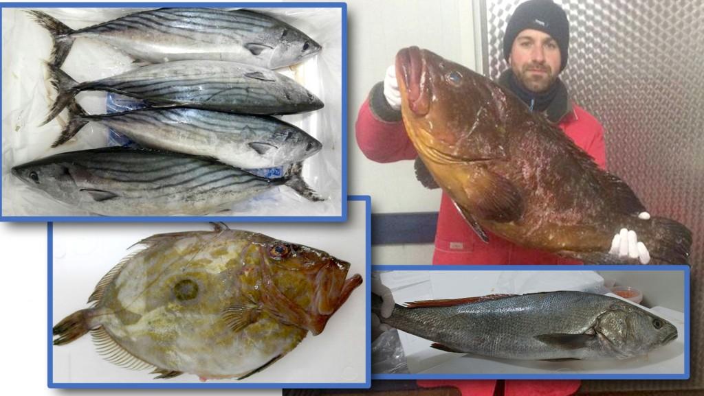 frischfisch-azoren